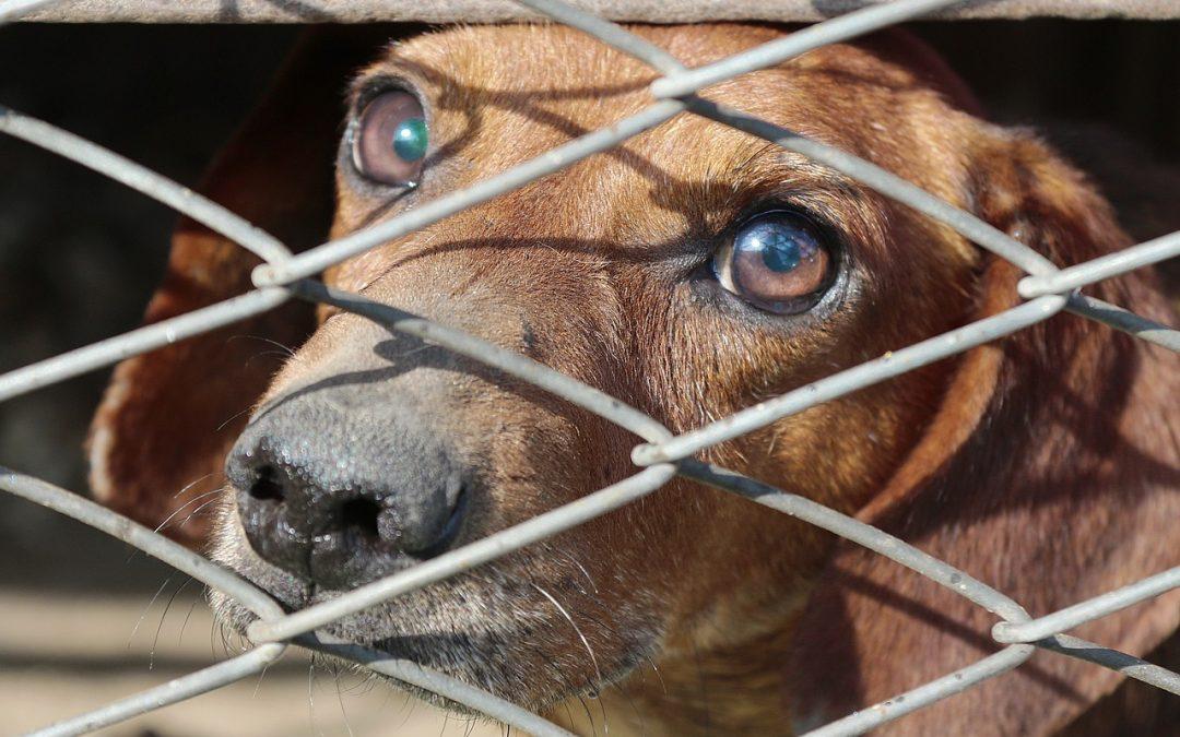 Se préparer pour accueillir son chien en fabriquant sa cage