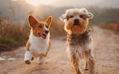 Le dressage de chiens, suivez ces conseils