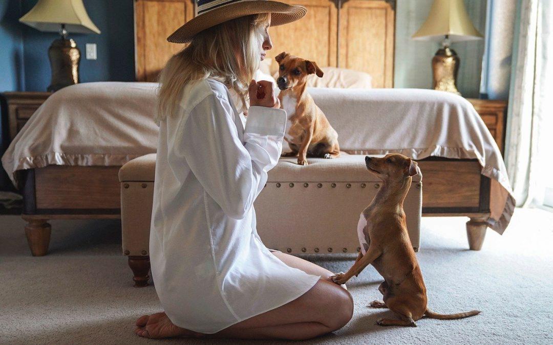 De quel type d'assurances pour animaux avez-vous besoin?