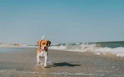 Pourquoi est-il important de privilégier les croquettes sans céréales pour son chien ?
