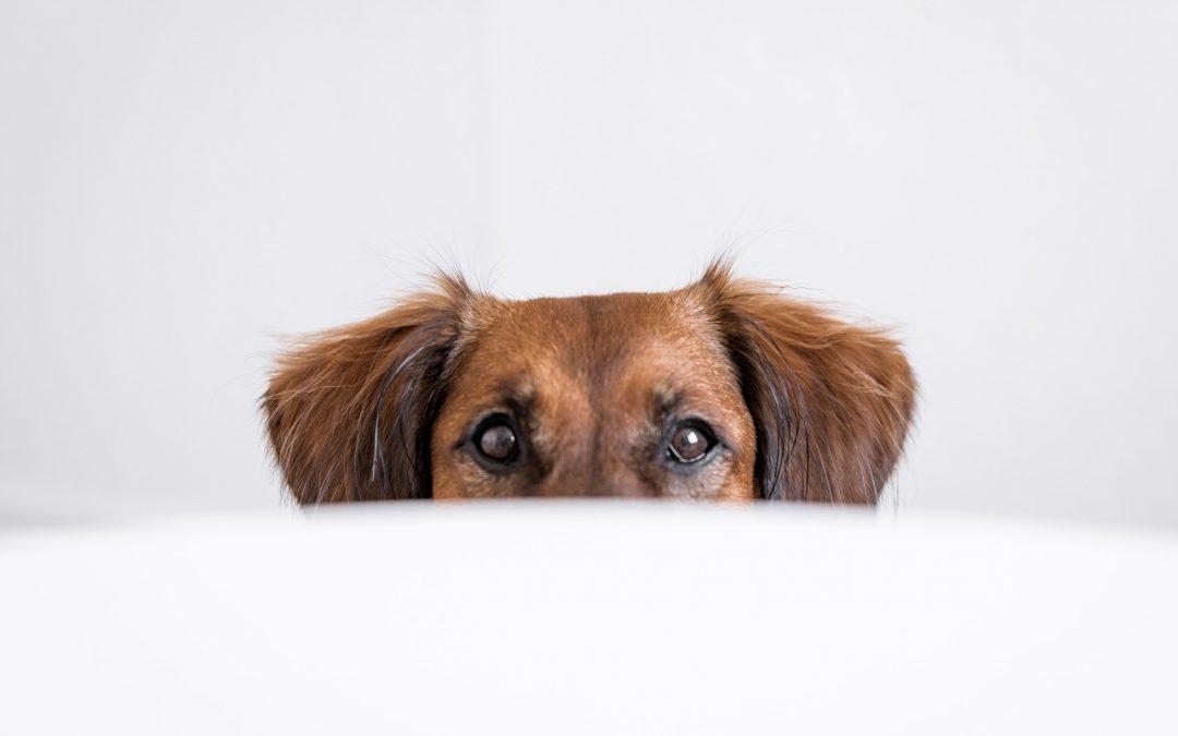 Que faire lorsque votre animal de compagnie n'est pas en forme ?