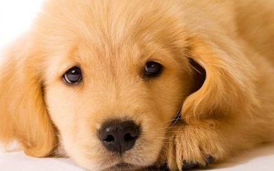 Comment choisir une assurance pour son animal de compagnie ?